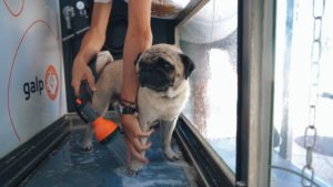 Dogwash 3